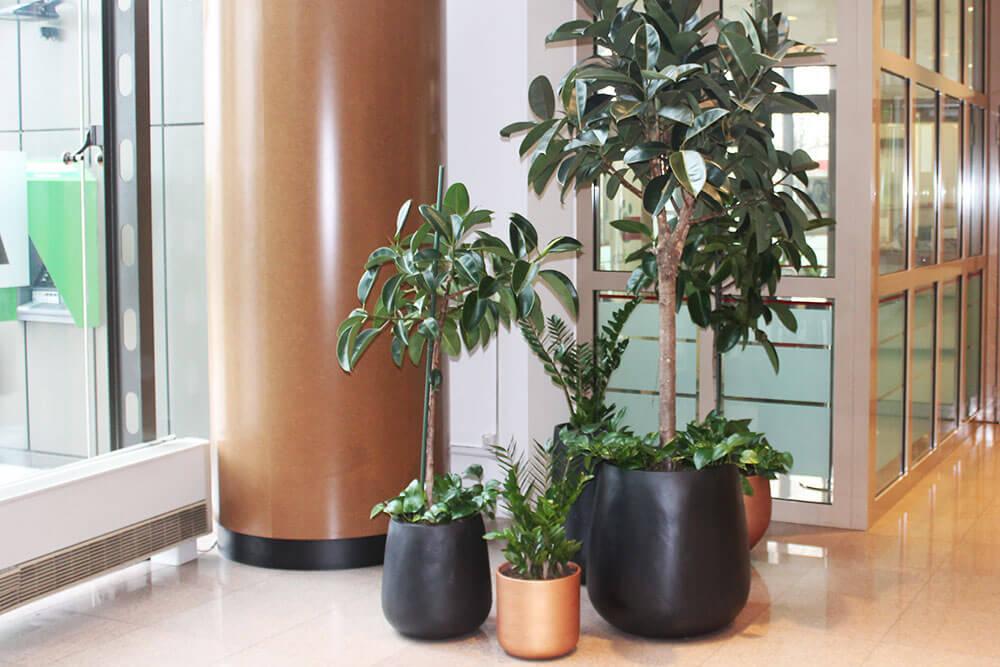 zelenilo u poslovnim prostorima